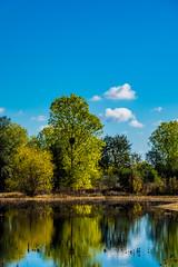Wetlands Reflections (randyherring) Tags: ca california centralcaliforniavalley cosumnesriverpreserve elkgrove afternoon aquaticbird nature outdoor recreational waterfowl wetlands