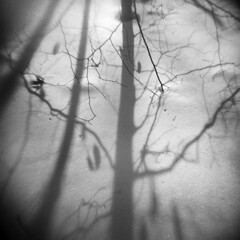 Trace (LowerDarnley) Tags: holga winter shadows trees morningwalk middlesexfellsreservation stomeham ma branches snow