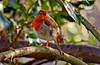 Robin (Gaz-zee-boh) Tags: robin bird robinredbreast nature london n7 londonnature avian almostanything naturewatcher urbannature ilovenature red wildbird birds europeanrobin erithacusrubecula