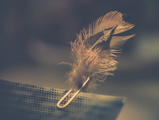 Fastener of the feather