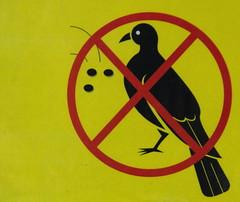 No Birds Allowed to Look at Dots (Bracus Triticum) Tags: no birds allowed look dots sign kagoshimacity 鹿児島市 kagoshimaprefecture 鹿児島県 九州 kyushu 日本 japan 9月 九月 長月 くがつ kugatsu nagatsuki longmonth 2017 平成29年 fall autumn september