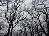 Pain (Giorgi Natsvlishvili) Tags: photography travel trees twigs sinuous curves pain sky winding kakheti georgia zigzag twists