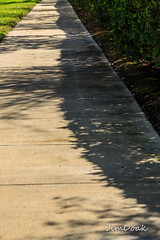 Begins Letter S (jimd_603) Tags: 2018 february florida takeaim beginsletters sidewalk shadow