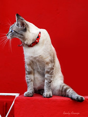 DSC09962 NET (rauly 1974) Tags: gato gatos cat cats kit kits animalplanet red vermelho cor color