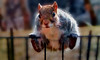 Whimsy: Hang on! (boriches) Tags: squirrel