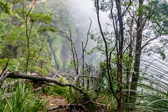 Above the falls (palbion) Tags: waterfall springbrook queensland australia au