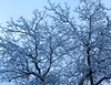 Winter? (-alac-) Tags: snow schnee winter baum tree walnussbaum