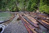 Logs! Pender Island, BC. Jan 21, 2018. (Doug Murray (borderfilms)) Tags: logs pender island bc jan 21 2018