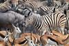 Stuck in traffic! (jules_1200r) Tags: waterhole wildlife namibia etosha africa animals zebra