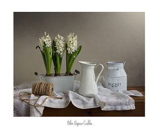 De blancos y con perfume de jacintos......