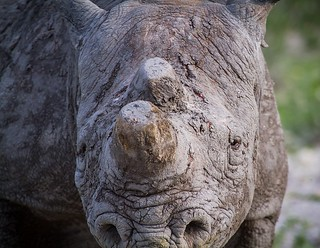Namibia Rhino Etosha