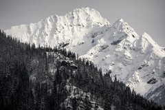 North Cascades in Snowy Splendor (SomethingUWontForget) Tags: mountainside mountain snow forest wood tree sky north cascades national park d7200 blackandwhite bw