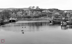 Auchinstarry Marina, Forth and Clyde Canal, Scotland (picsbyCaroline) Tags: barge canal scotland marina duck bird winter water landscape united kingdom waterfront