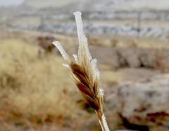 Ice Tower Small (Robert Cowlishaw (Mertonian)) Tags: powershot magna robertcowlishaw canonpowershotg1xmarkiii markiii g1x canon melancholy patterns winter snow icetower grass macro cemetery field mertonian