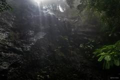 Rainbow Falls (palbion) Tags: waterfall springbrook queensland australia au