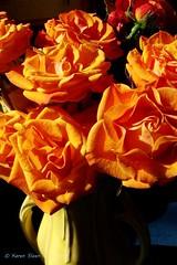 Roses in McCoy vase (Karen @ Wall Flower Studio) Tags: wallflowerstudio rosesandamaryllisseedpods roses rose orange vase mccoy vintage flowers scent indoors kitchen yellow cutflowers florist