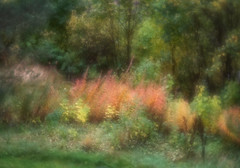 Fall (Anne Worner) Tags: fall autumn norway bergen nature landscape lensbaby velvet56 manualfocus manualfocuslens anneworner em5 olympus