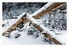 Splinter (bprice0715) Tags: canon canoneos5dmarkiii canon5dmarkiii nature naturephotography snow adirondacks adirondackmountains adirondackpark trees lines shapes outdoors woods beauty beautiful beautyinnature