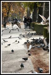 (Estibaliz Llano Vicente) Tags: madrid spain españa capital viaje trip palomas retiro parque birds