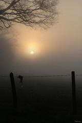 Un matin différent (martine_ferron) Tags: matin soleil hiver brume clôture leverdesoleil