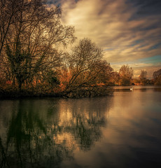 Pallington lake (10000 wishes) Tags: lake sunset water trees naturephotography reflections beauty cold icy swan