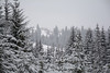 Carpathians in white (Ihor Hlukhoi - intui.pro) Tags: mountain carpathians mountains adventure travel hiking tourists top tourism tourist ridge landscapes landscape ukraine outdoor hill mountainside foothill snow intuipro photographer photo d7100 nikond7100 nikon
