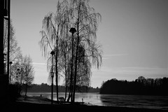winter on the river (EllaH52) Tags: winter river water trees lampposts streetlights tree