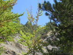 DSCN9561 (Gianluigi Roda / Photographer) Tags: apennines latesummer 2012 mountains geologicalevidences geologicaloutcrops trees rocks appenninobolognese crocedeicolli