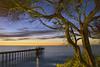 The Ocean's Marvel (Lee Sie) Tags: sunset lajolla sandiego scripps pier sea pacific ocean beach tree cypress sky clouds water seascape outdoors moon