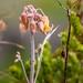 Bush Flowers-2