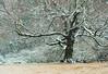 Sotto il grande albero - Under the big tree (Ola55) Tags: ola55 umbria italy winter inverno freddo cold gelo frost ghiaccio ice albero tree rami branches italians aplusphoto worldtrekker