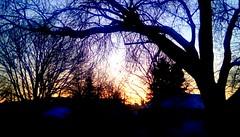 January morning! - TMT 365/66 (Maenette1) Tags: january morning sunrise trees menominee uppermichigan treemendoustuesday flicker365 michiganfavorites project365