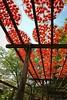 Wei Wei Jia persimmons Tourist Farm 味衛佳柿餅觀光農場 (melodyben) Tags: 台灣 新竹 新埔鎮 佳能 柿餅 味衛佳 taiwan