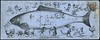 Fish Envelope (Boxbrownie3) Tags: victorian postalhistory stamps envelope ephemera