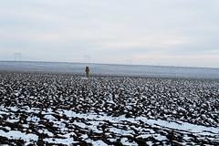 A cross in the field (Dumby) Tags: glina ilfov românia peisaj winter iarnă lx3 panasonic bărăgan seasons