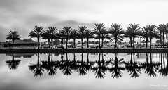 Peace and Reflections (Thank you, my friends, Adam!) Tags: wideangle lenses standard telephoto super closeup zoom adamzhang orlando lakemary nikkor teleconverter ngc 漂亮 nikon dslr 长焦 长焦镜头 尼康 镜头 中佛州 gallery fine art photography photographer excellent interesting explore fun nice