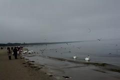 Swinemünde im Winter IMG_2234 (nb-hjwmpa) Tags: swinemünde schwäne fütterung ostsee strand swinouscie poland