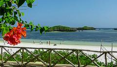 Watamu beach-Kenya (johnfranky_t) Tags: indiano kenya kenia johnfranky t panasonic tz40 staccionata isolotti sabbia bianca bouganville ocean indian fence sand beach islets