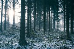 Winter Forest (AmBasteir) Tags: wald forest holz baum tree landscape landschaft nebel fog erzgebirge sachsen germany deutschland saxony nikon nikond810 nikkorlens nikkor1635mm winter schnee snow sunlight sunset