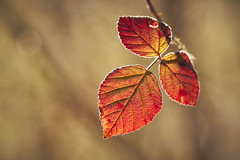 Waiting for spring (Lt_Dan) Tags: canon600d canon100f28macro nature natureshot macro natura leaves foglie bokeh