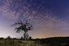 En la soledad de la noche. (Juan Galián) Tags: nocturna night nightshoots nocturnas nightscape nubes largaexposición landscape longexposure canon60d tokina árbol cielo