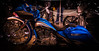 BLUE SWANN (TONY VIKLICKY) Tags: nikon wings viklicky dreams can come true motor bike rodding pipes chrome customizing lines smooth beauty show toronto