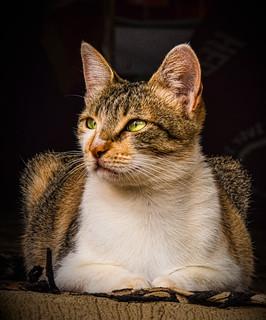 The Sari-sari's Cat #3