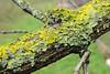 Metamorphosis (JuliSonne) Tags: branch sick nature parasitic metamorphose