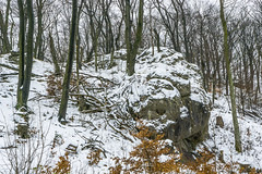 Ascent to Hellstone (a7m2) Tags: wienerwald natur fauna flora hike wandern föhrenberge naturschutzgebiet weitwanderweg mödling sittendorf loweraustria