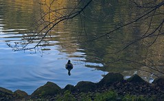 Who is there? (anddm) Tags: birds nature lake darktable rome sony mirrorless