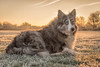 Winter Sky (Chris Willis 10) Tags: dogs walk winter quote sky life death dog animal pets purebreddog canine nature outdoors mammal grass domesticanimals looking cute oneanimal summer brown puppy friendship sunlight sunrise frost