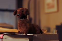 Little Lua (Shark Tough) Tags: stuffedanimal doggy littledog dog toydog toy warmlight splittoning cutedog