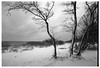 (Veronika Chikalova) Tags: filmph filmphotography 35mmfilm trees tree bwphoto bw landscape landschaft blackandwhite russia gulf gulfoffinland