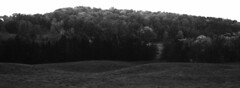 Treed Hill (pmvarsa) Tags: fall autumn 2017 analog film 35mm 135 ferrania ferraniap30alpha p30 panchromatic classic camera nikonsupercoolscan9000ed nikon coolscan outside cans2s outdoors contrast landscape hill trees grasses panorama farm rural agriculture moraine nature trail bw blackandwhite waterloo ontario canada mamiya rb67 pros mamiyarb67pros mamiyarb67